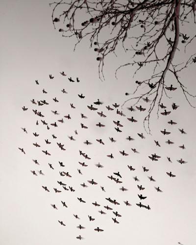 Online dating for birders
